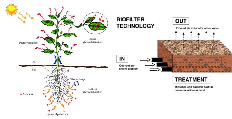 Afbeelding: Figure 2 - Biophilia as a way to control indoor climate for human comfort.png